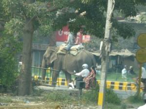 Elephant in Delhi street